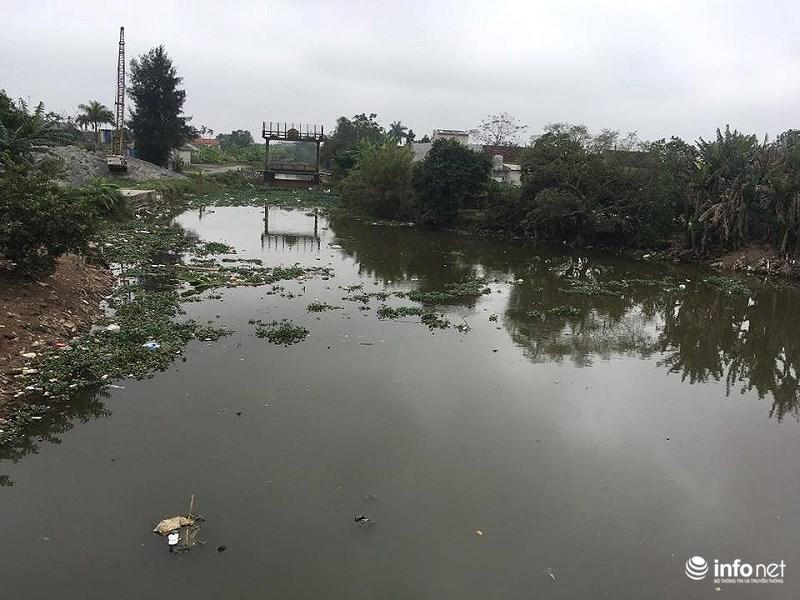 Nam Định: Xác lợn chết nổi lềnh phềnh đầy sông, ngay trước nhà bí thư 16