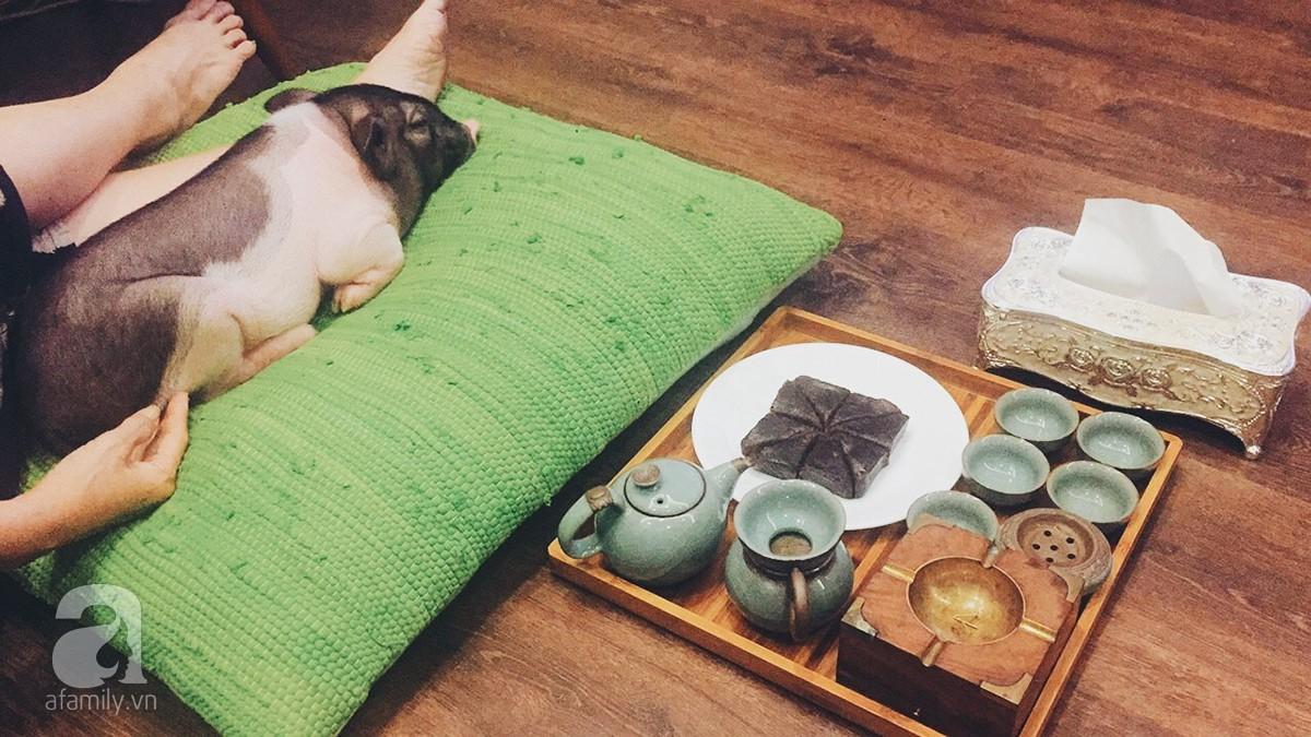 Gia đình ở Sài Gòn nuôi chú heo nặng gần 60kg, thực đơn riêng có tôm càng, xúc xích Đức, tổ yến 3