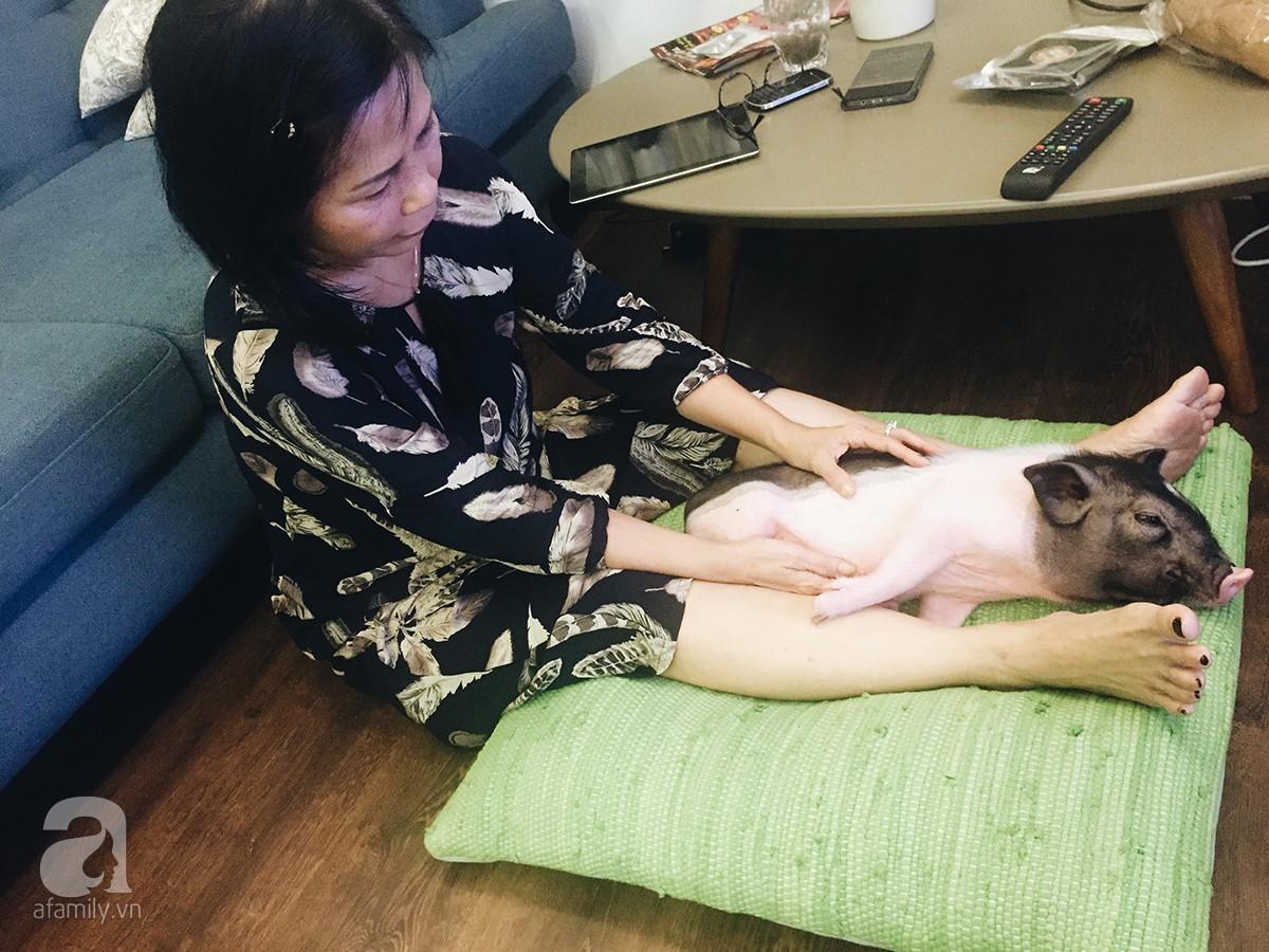 Gia đình ở Sài Gòn nuôi chú heo nặng gần 60kg, thực đơn riêng có tôm càng, xúc xích Đức, tổ yến 4