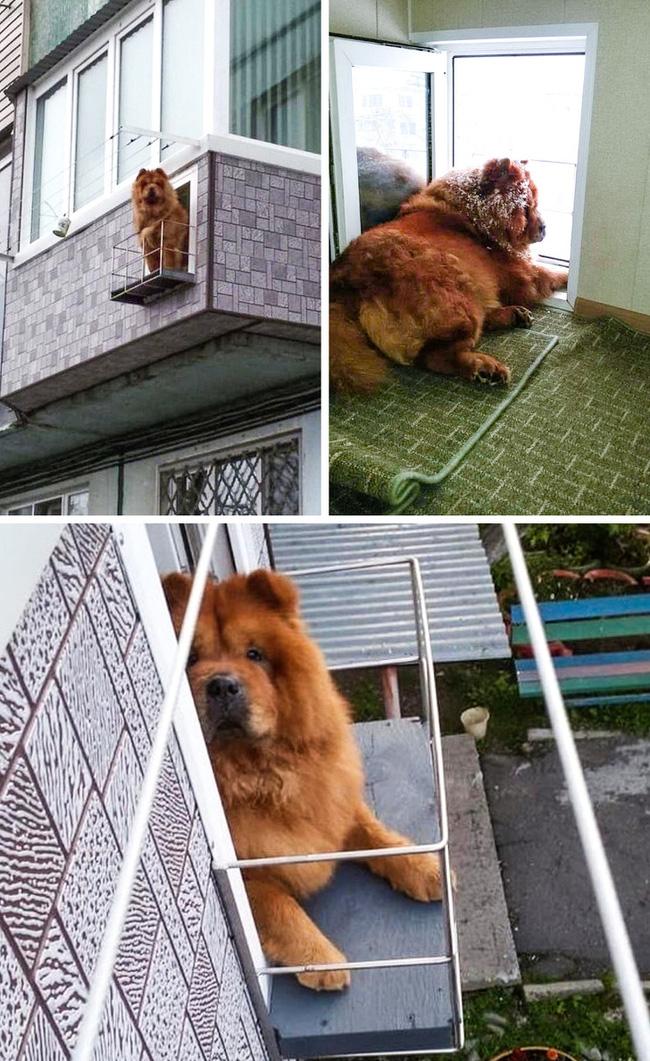 Một ban công dành riêng cho chú chó yêu quý trong ban công của ngôi nhà.