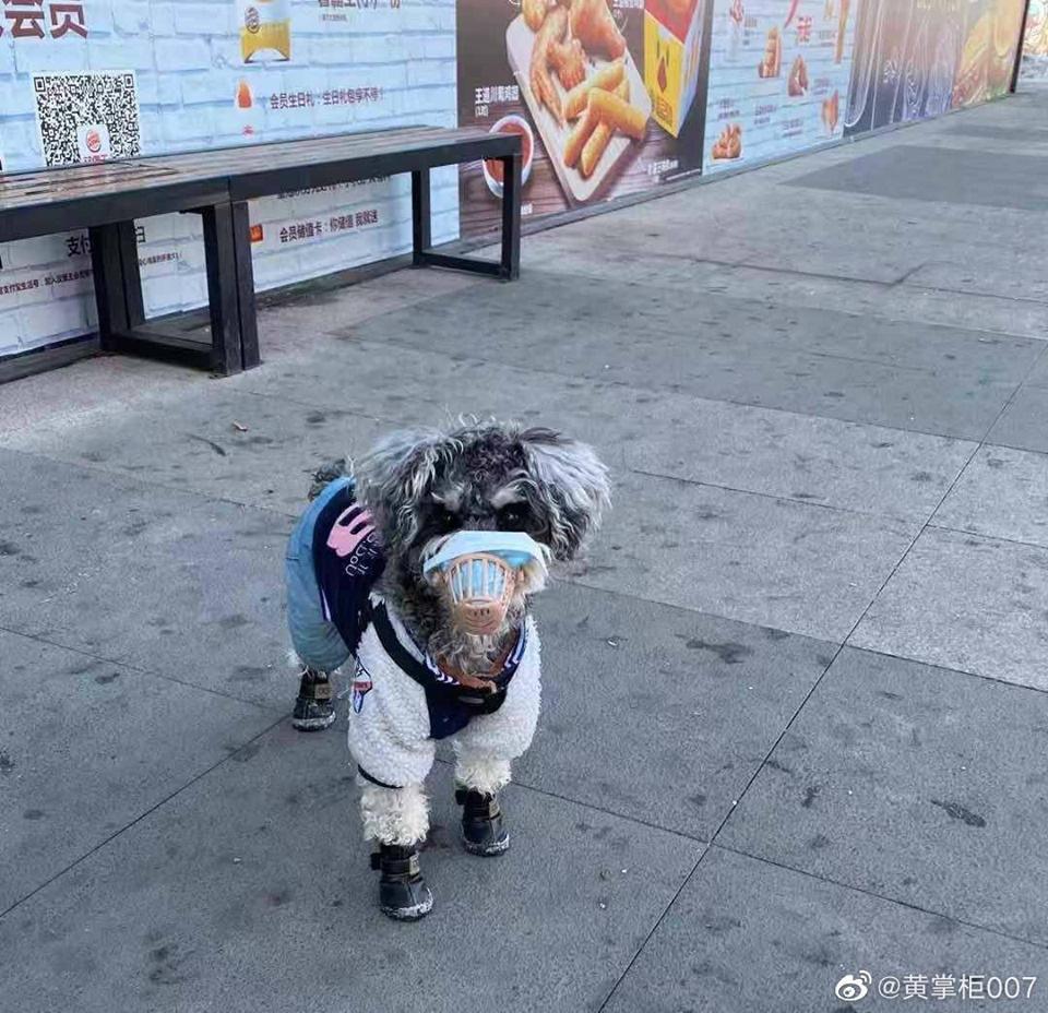 Nhiều sen còn kỹ hơn khi mặc 'trang phục bảo hộ' cho boss trước khi ra ngoài đi dạo.