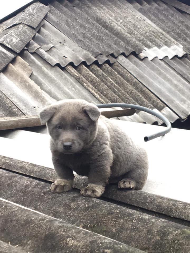 Báo động: Độ hot của Nguyễn Văn Dúi đã lan rộng toàn cầu, trong 5 ngày trở thành chú chó được cả thế giới yêu quý! 1