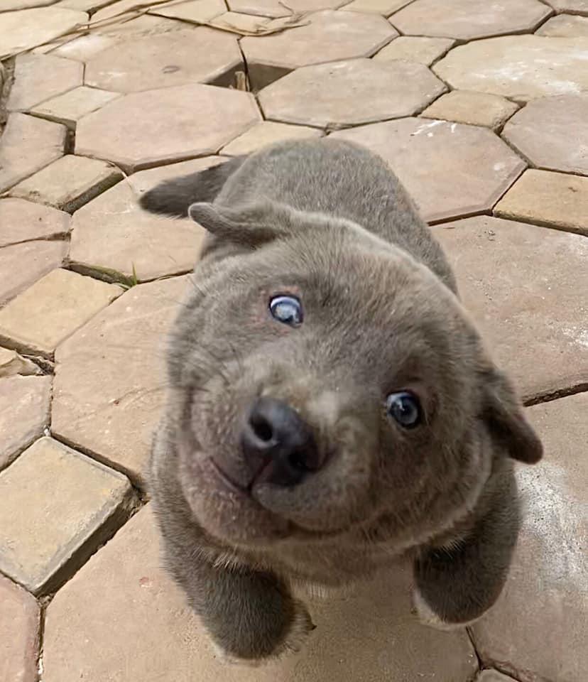 Báo động: Độ hot của Nguyễn Văn Dúi đã lan rộng toàn cầu, trong 5 ngày trở thành chú chó được cả thế giới yêu quý! 5