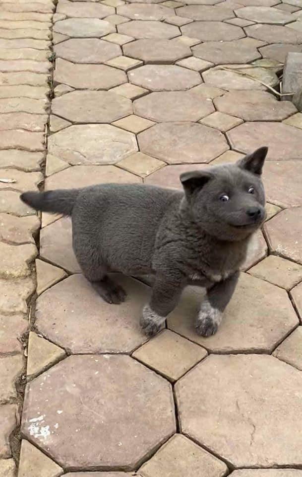 Báo động: Độ hot của Nguyễn Văn Dúi đã lan rộng toàn cầu, trong 5 ngày trở thành chú chó được cả thế giới yêu quý! 6