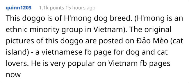 'Chú chó này là giống chó Mông - một dân tộc thiểu số ở Việt Nam. Bức ảnh ban đầu được đăng ở group Đảo Mèo. Chú cún đang rất nổi tiếng trên Facebook.'