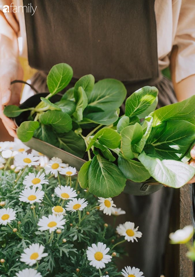 Cuộc sống êm đềm của đôi vợ chồng trẻ người Việt ở Đức: Dù sống giữa vùng dịch vẫn bình thản trồng rau, làm bánh 3