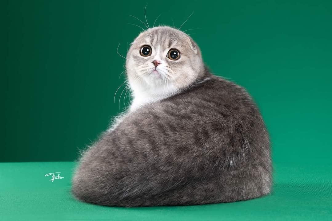 Tạo dáng vô cùng 'so deep' trước ống kính, cô mèo mướp khiến cả mạng xã hội hiểu nhầm là 'hải cẩu phiên bản có lông' 1