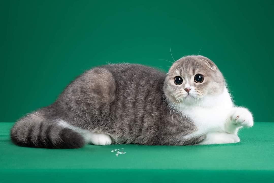 Tạo dáng vô cùng 'so deep' trước ống kính, cô mèo mướp khiến cả mạng xã hội hiểu nhầm là 'hải cẩu phiên bản có lông' 2