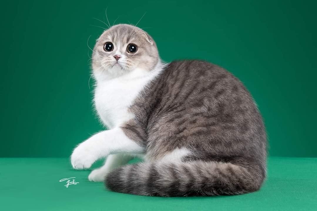 Cô mèo này đúng kiểu: Khi bạn sinh ra làm mèo nhưng tính cách và hình hài lại thuộc về nhà hải cẩu!