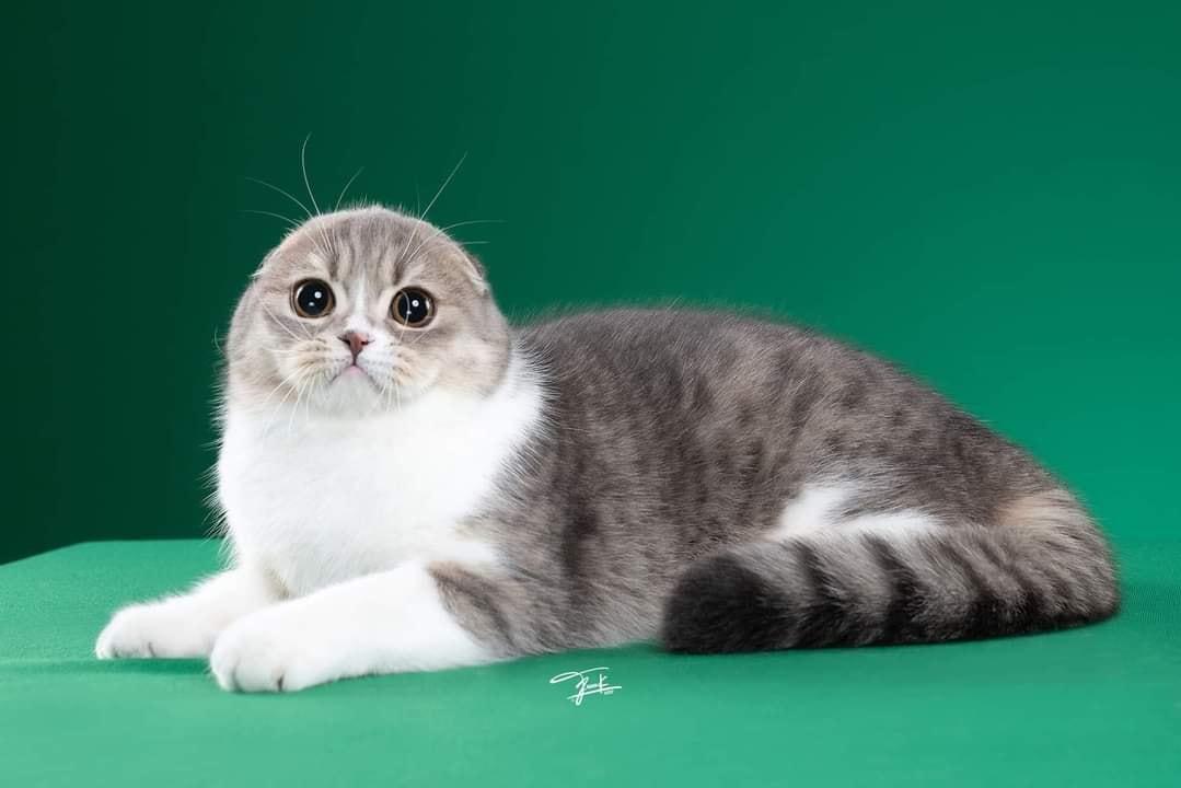 Tạo dáng vô cùng 'so deep' trước ống kính, cô mèo mướp khiến cả mạng xã hội hiểu nhầm là 'hải cẩu phiên bản có lông' 3