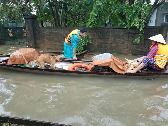 Hàng trăm con vật được cứu khỏi vùng ngập, dân mạng cấp bách lan truyền hình ảnh chú chó nằm trên 'nóc lũ' chờ trợ giúp 0