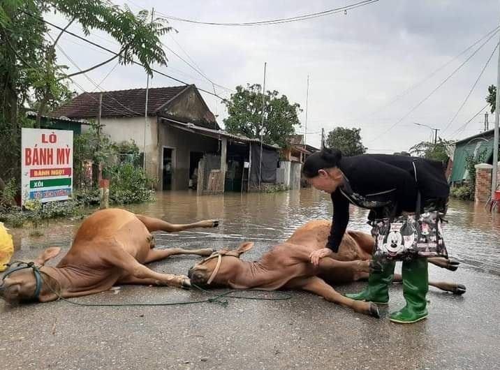 Hàng trăm con vật được cứu khỏi vùng ngập, dân mạng cấp bách lan truyền hình ảnh chú chó nằm trên 'nóc lũ' chờ trợ giúp 3