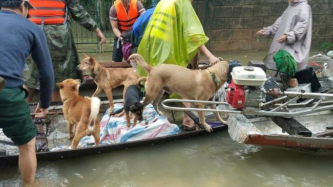 Hàng trăm con vật được cứu khỏi vùng ngập, dân mạng cấp bách lan truyền hình ảnh chú chó nằm trên 'nóc lũ' chờ trợ giúp 1