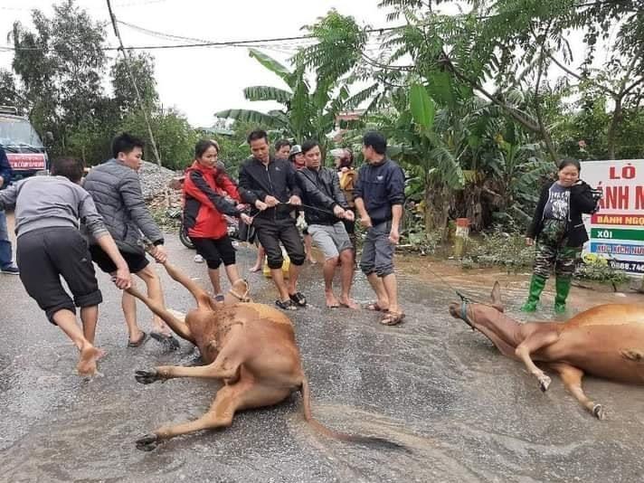 Hàng trăm con vật được cứu khỏi vùng ngập, dân mạng cấp bách lan truyền hình ảnh chú chó nằm trên 'nóc lũ' chờ trợ giúp 5