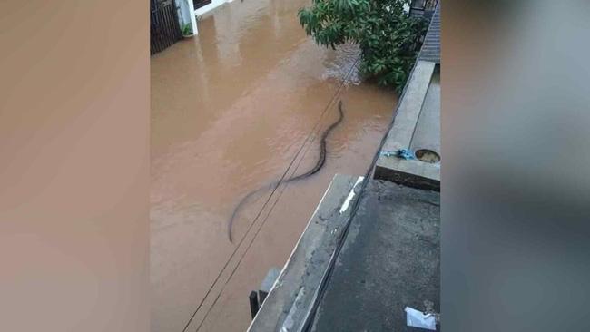 Hình ảnh này được chụp từ Thái Lan và được báo chí nước này đưa tin để cảnh báo những nguy hiểm trong mùa bão lũ.