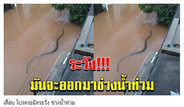 Trang tin Mumkhao.vn Thái Lan đã đăng tải bài viết: Cảnh báo, hãy cẩn thận trong thời gian lũ lụt.