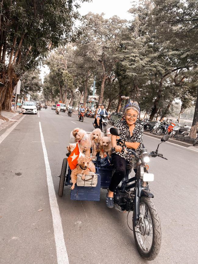 Khoảnh khắc di dạo cùng đàn chó nhỏ của cụ bà khiến nhiều người vô cùng thích thú.