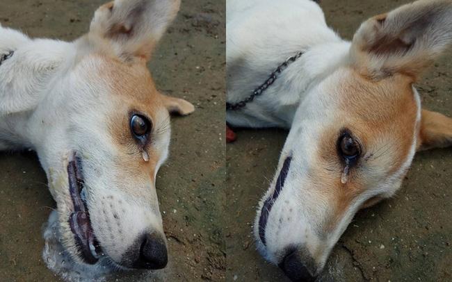 Chó cưng sủa liên tục trong đêm, nhà chủ không mảy may nghi ngờ, đến sáng thấy cảnh đau lòng mới biết nhờ gia đình thoát nạn 0