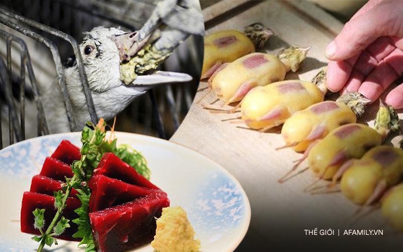 Súp vi cá mập, gan ngỗng, sushi cá ngừ, liệu con người có thấu nỗi đau mà loài vật phải chịu để cho ra ẩm thực 'tinh hoa'? 0