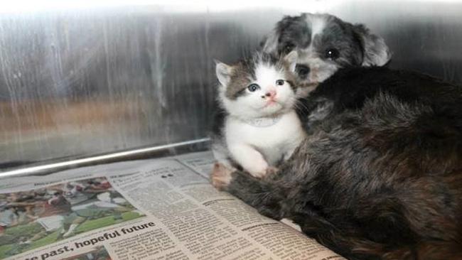 Chó nhận mèo làm con nuôi và câu chuyện về tình mẫu tử chạm tới trái tim tất cả mọi người 0