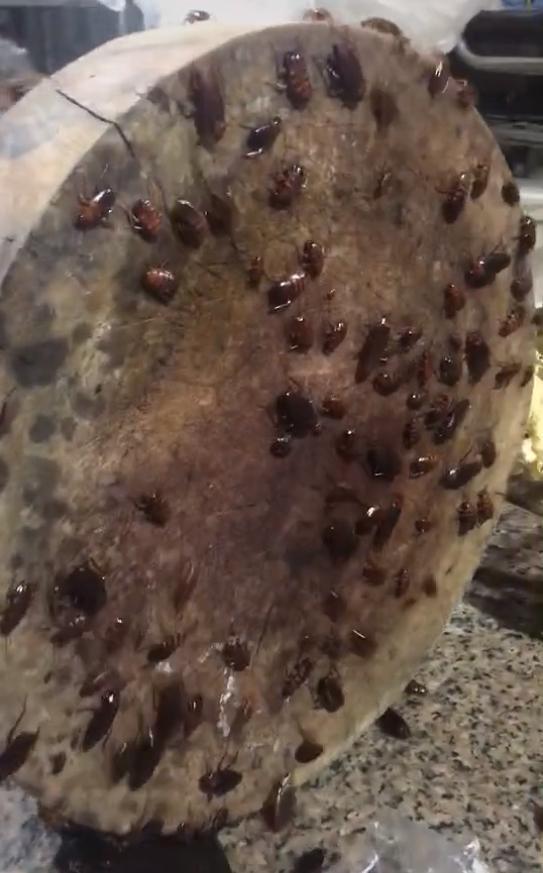 Căn bếp kinh hoàng nhất từng thấy với hàng chục thứ sinh vật bò lổm ngổm khiến ai cũng khiếp sợ hãi 1