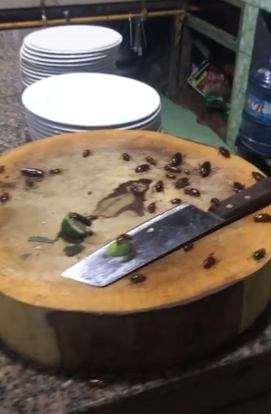 Căn bếp kinh hoàng nhất từng thấy với hàng chục thứ sinh vật bò lổm ngổm khiến ai cũng khiếp sợ hãi 2