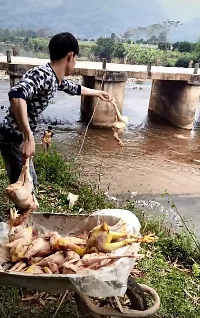 Chàng trai quăng hàng chục con gà xuống suối khiến dân mạng nhao lên tiếc rẻ, hóa ra đó lại là 'hậu trường' làm cổ cỗ cưới 0