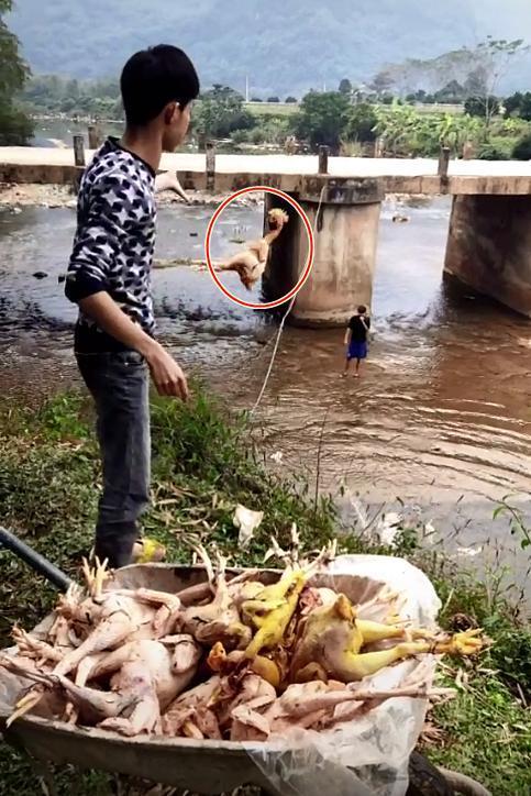 Chàng trai quăng hàng chục con gà xuống suối khiến dân mạng nhao lên tiếc rẻ, hóa ra đó lại là 'hậu trường' làm cổ cỗ cưới 1