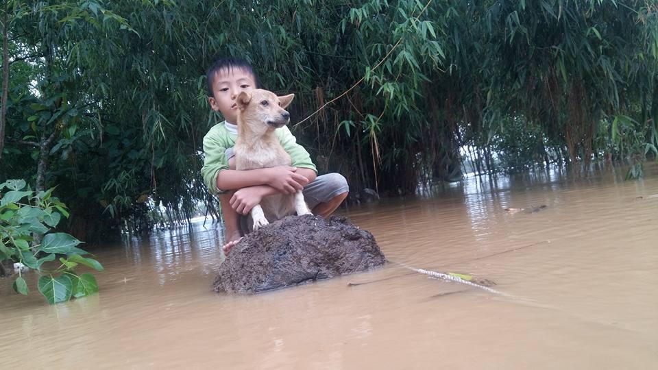 Rơi nước mắt hình ảnh chó mẹ tha con giữa dòng lũ, hàng loạt động vật rưng rưng như kêu cứu, dân mạng: 'Người cứu còn không xuể, biết làm sao đây?' 6