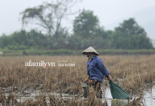 Khung cảnh tại quê hương Đỗ Thị Hà trong những ngày chờ đón Tân Hoa hậu về làng 1