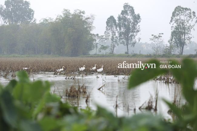 Khung cảnh tại quê hương Đỗ Thị Hà trong những ngày chờ đón Tân Hoa hậu về làng 3