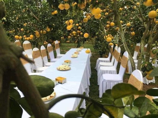 Đám cưới trong vườn cam sai trĩu quả khiến dân mạng trầm trồ nhưng vẫn lo ngại một nguy cơ 0