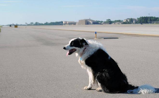 Chó 'đột nhập' sân bay ở Thanh Hóa, máy bay phải chờ hạ cánh 0