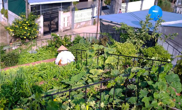 Vườn rau trên mái xanh tươi mát mắt.