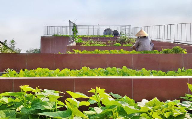 Không gian là nơi được sử dụng để trồng rau.