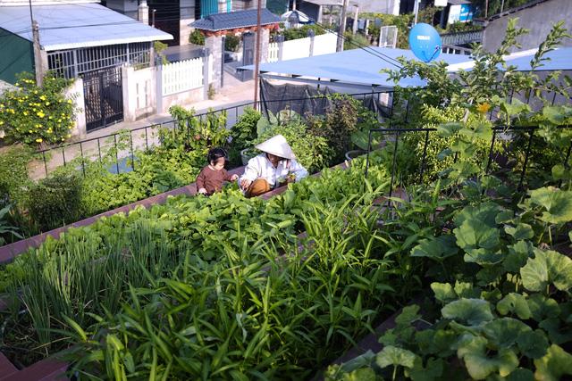 Vườn rau 7 bậc thang xanh tươi trên mái nhà của vợ chồng trung niên được các con xây tặng ở Quảng Ngãi 6