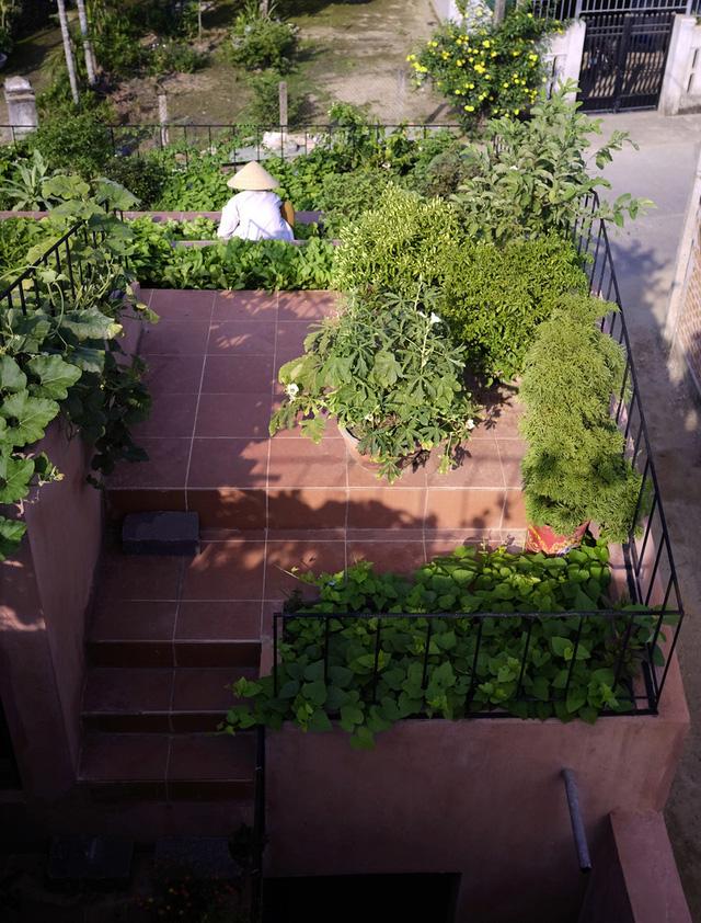 Vườn rau 7 bậc thang xanh tươi trên mái nhà của vợ chồng trung niên được các con xây tặng ở Quảng Ngãi 7