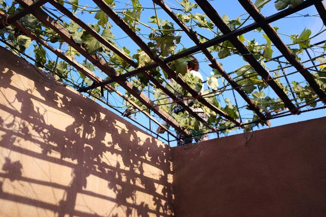 Vườn rau 7 bậc thang xanh tươi trên mái nhà của vợ chồng trung niên được các con xây tặng ở Quảng Ngãi 10