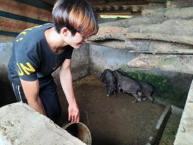 Học sinh cũ Tẩn Láo Tả của cô giáo Thanh Thanh đang chăn những con lợn giống đầu tiên của Ngân hàng Lợn.