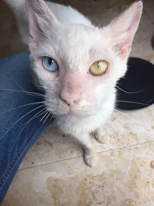 Nhận nuôi chú mèo mù lòa thân tàn ma dại, cô gái giúp con vật 'lột xác' thần kỳ nhưng ngỡ ngàng hơn khi nó mở to đôi mắt 1