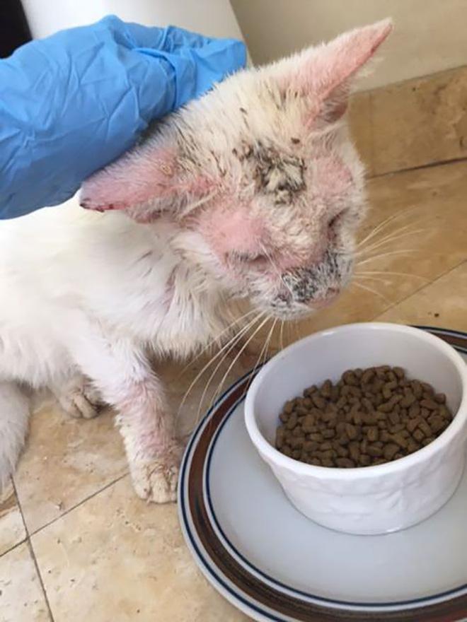 Nhận nuôi chú mèo mù lòa thân tàn ma dại, cô gái giúp con vật 'lột xác' thần kỳ nhưng ngỡ ngàng hơn khi nó mở to đôi mắt 3