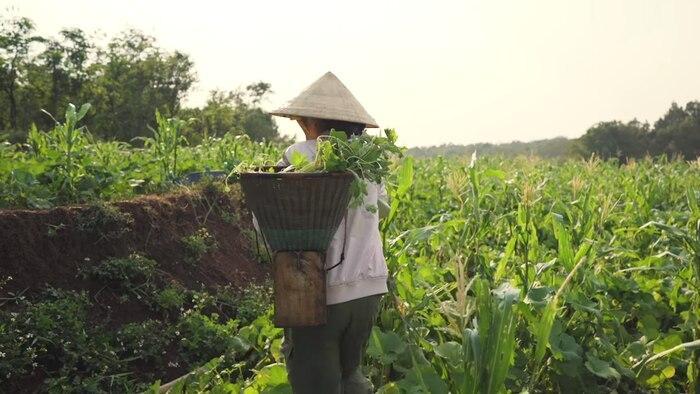 H'Hen Niê đáng yêu hết nấc cover hit của Thu Minh, Chi Pu phiên bản… hái rau 2