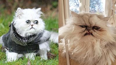 Chú mèo có khuôn mặt 'cáu bẳn nhất thế giới': Dậy thì không thành công đích thị là em!