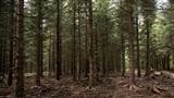 Phát hiện giống cây cao gần 100m, phá kỷ lục thế giới