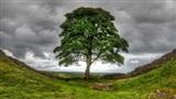 Những cái cây bỗng dưng nổi tiếng khắp thế giới theo cách không thể ngờ
