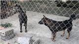 Chủ đàn chó dữ cắn bé trai 7 tuổi tử vong đối diện hình phạt nào?