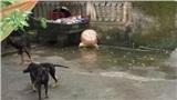 Chủ đàn chó cắn chết bé 7 tuổi tiết lộ sốc