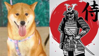 Đạo diễn 'Cậu Vàng' kiên quyết không đổi chó Shiba, dân mạng tức giận viết kịch bản mới cực 'khó đỡ'