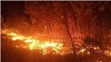 Cháy rừng diện rộng, người dân 3 huyện ở Nghệ An trắng đêm dập lửa