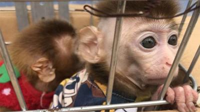 Vào công viên chơi, cặp đôi 'tiện tay' trộm khỉ về nuôi
